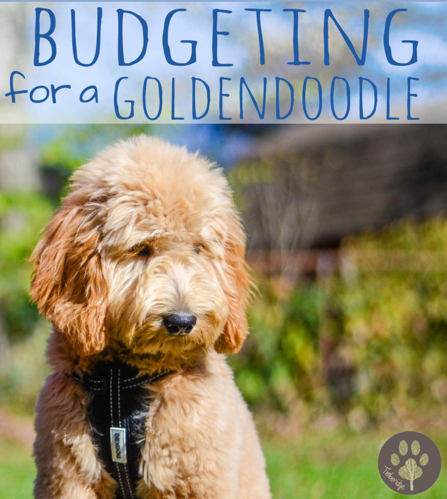 Budgeting For A Goldendoodle Timberidge Goldendoodles